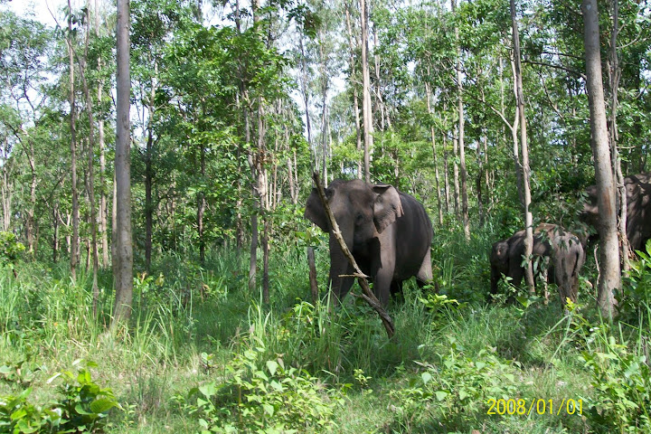 Wayanad Wildlife Sanctuary Tholpetty