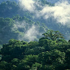 An aerial of the Penas Blancas Valley in Monteverde Cloud Forest Reserve, Costa Rica