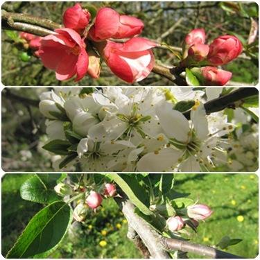 Tre blomster