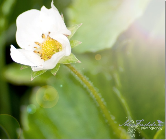 flower-web