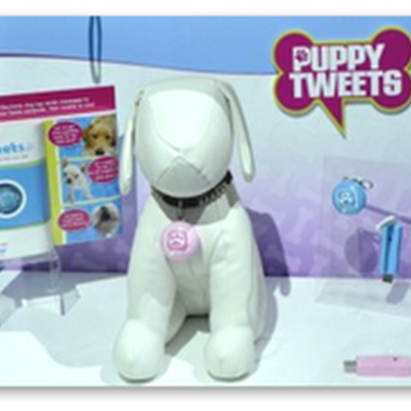 Does Your Dog Need a Tweet – Not Treat, Tweet – Puppy Tweets Can Make That Happen With Twitter