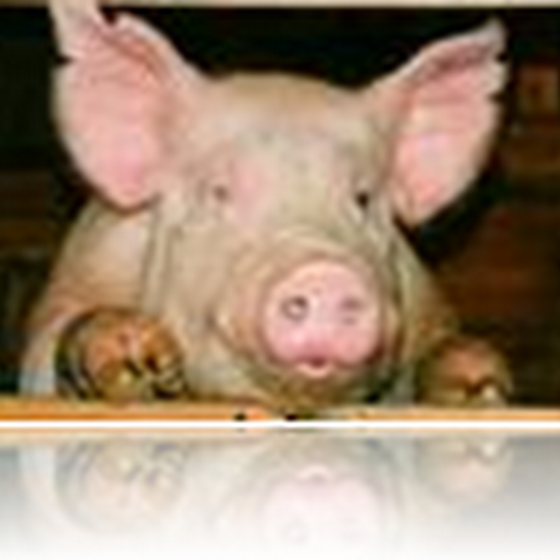 Two probable swine flu cases found in Irvine, CA- Update