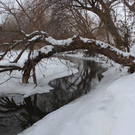 Kansas Snowy Creek by Robert D Brozek - Landscapes Prairies, Meadows & Fields ( water, reflection, bright, colorful, white, limb, winter, season, creek, snow, bark, tree's, kansas,  )