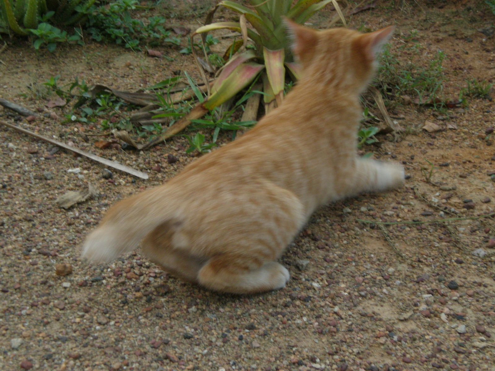 Macam Macam Kucing