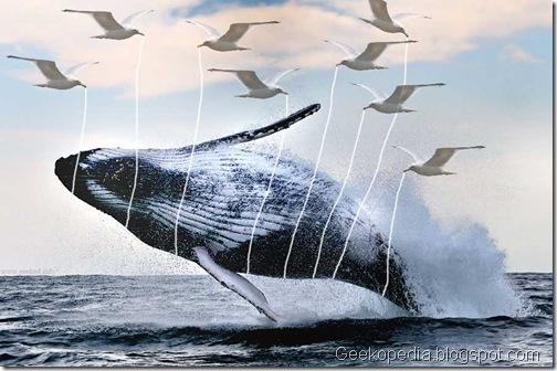 reallifefailwhale