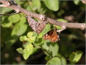 3butterflies2