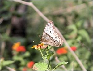 butterfly724