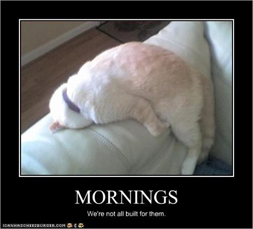 funny-pictures-cat-hates-mornings