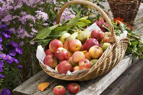 Яблочный спас. Блюда из яблок. Рецепты