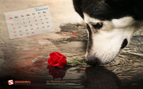 собака и роза