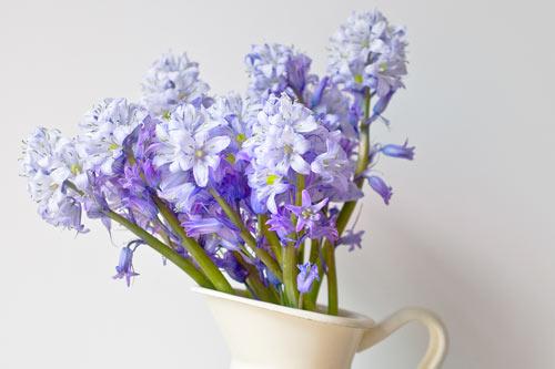 Spanish-bluebells-in-a-jug-close-up.jpg