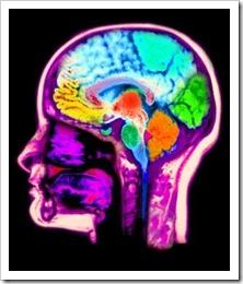 New men's brain