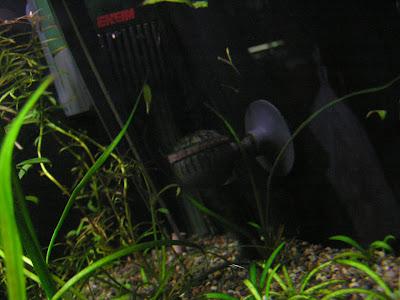 固形肥料を2粒ほど根元に追肥
