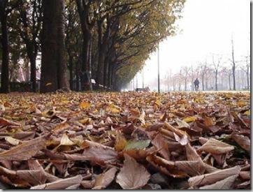 foglie morte...e la natura riprende il suo ciclo