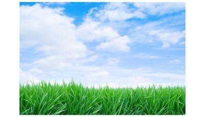 green-grass-blue-sky