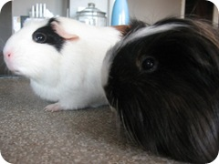 Piglet and Tigger
