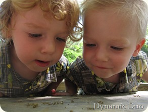 bug watchers (2)