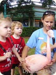 flamingo photo op!