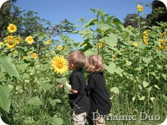 sunflower love from the boys, too! (3)