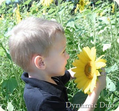sunflower love from the boys, too! (5)