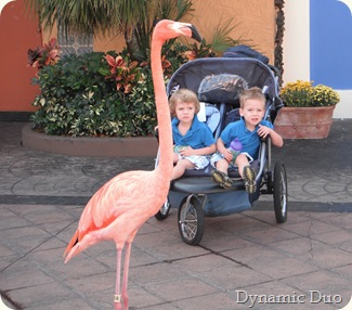 flamingoes walking  (2)