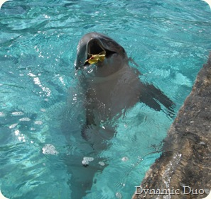 dolphin playing with a leaf, too cute!!!
