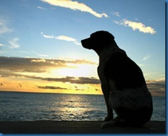 dog-sunset-278x225