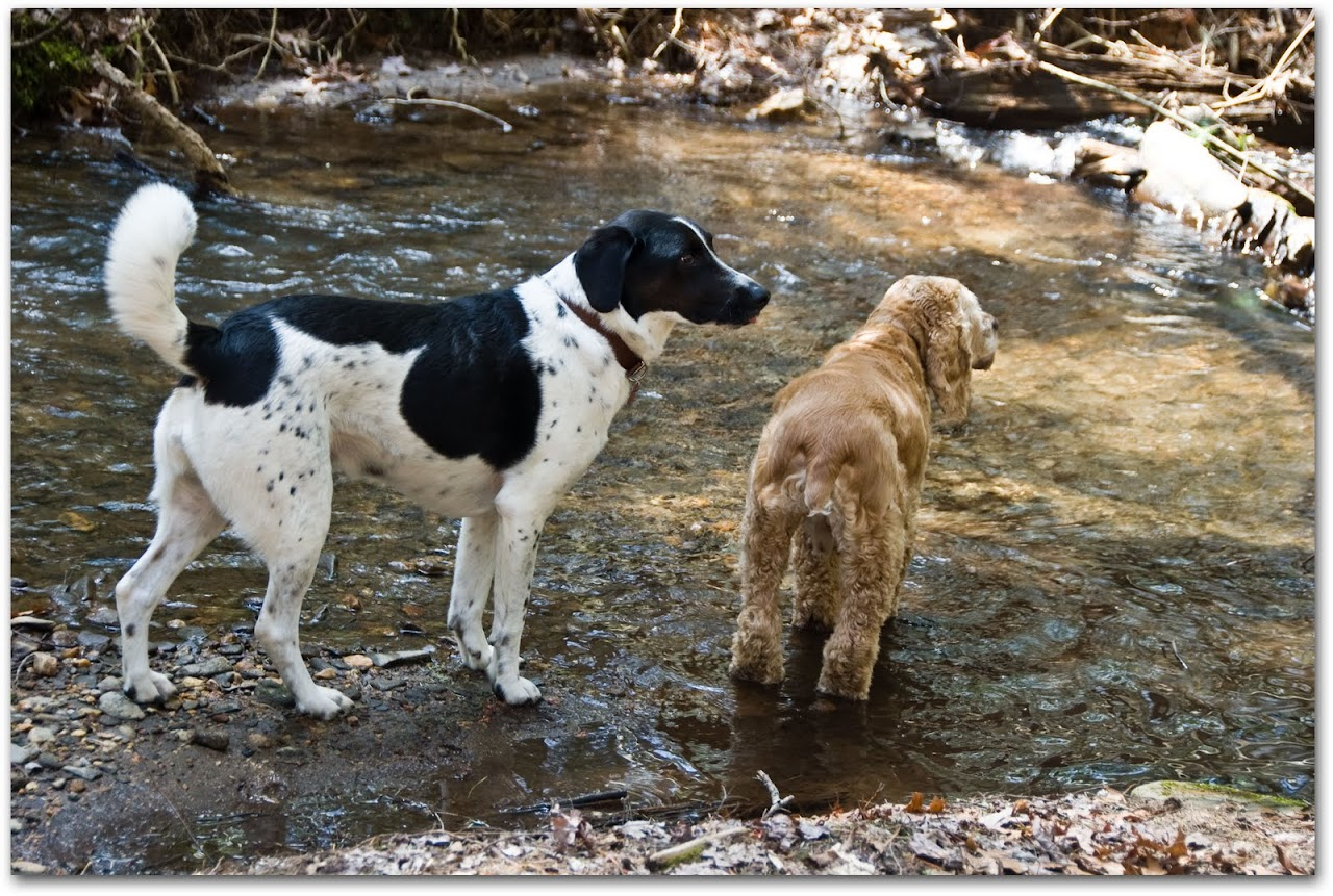 Chewy and Abby in the river