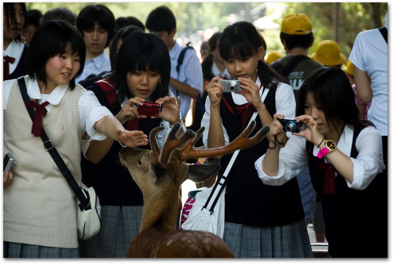 Celebrity deer