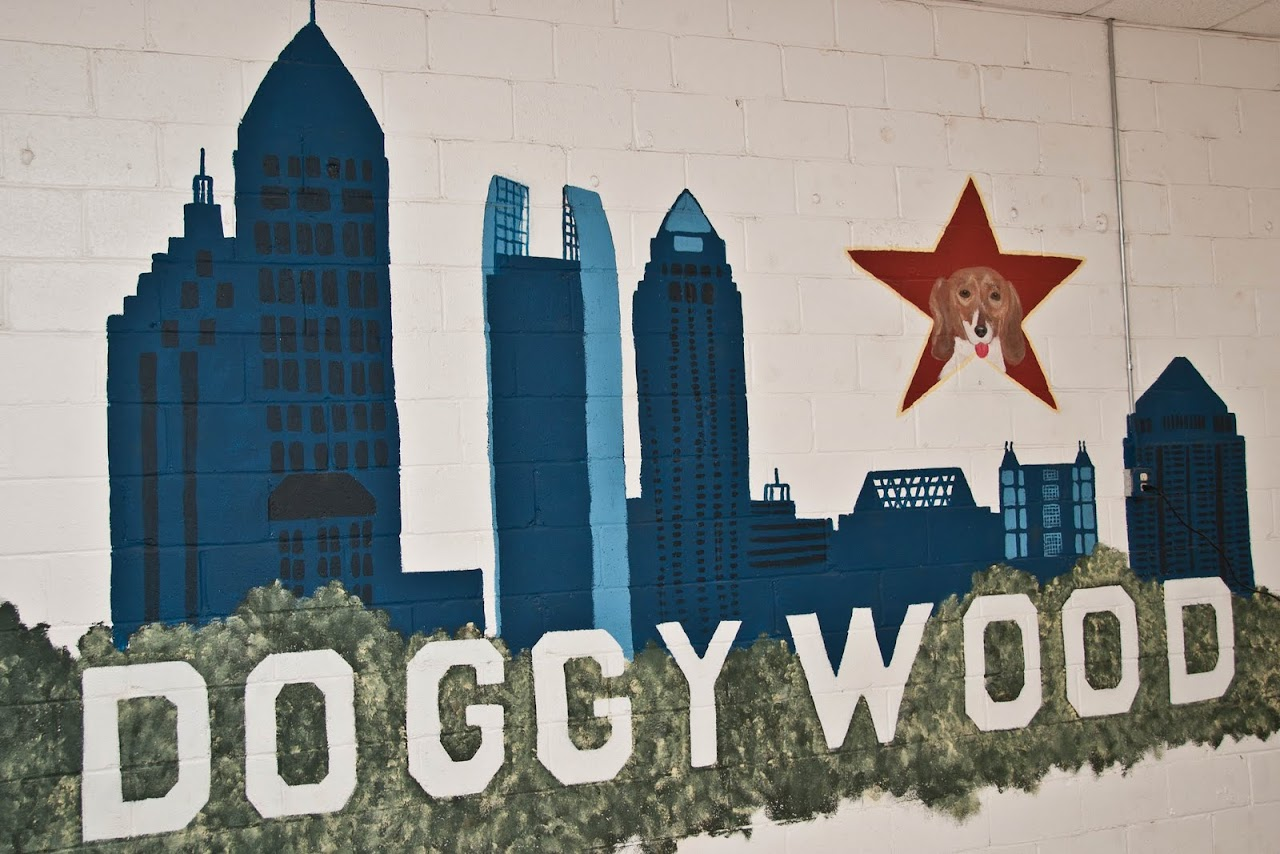 Doggywood Atlanta Dog Spa