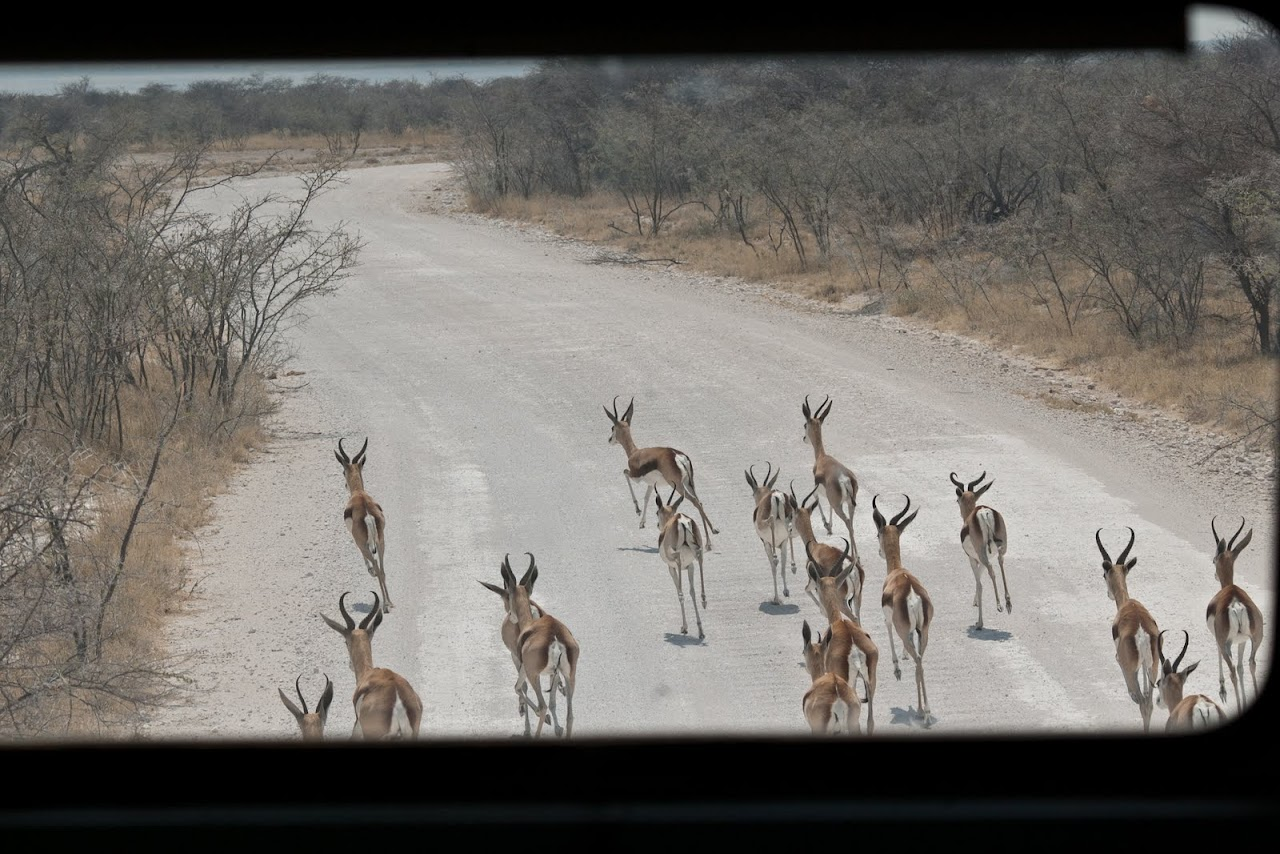 Springbok through the front windo