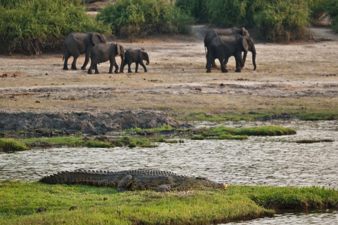 Elephants walking away from river
