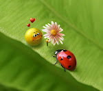 When a pea loves a ladybug_33566692.jpg
