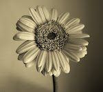 Retro sunflower_33566688.jpg