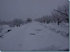 2009 01 03 Νάουσα Χιονόπτωση_005