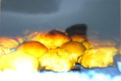 Folar feito no forno da Amélia há alguns anos