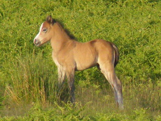 Amber's foal