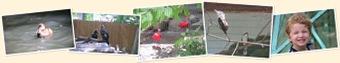View Tracy Aviary June 25, 2009