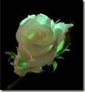 flores59zr4
