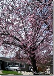 Feb27_Spring