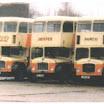 Rush, Sniffer & Leylandi.JPG