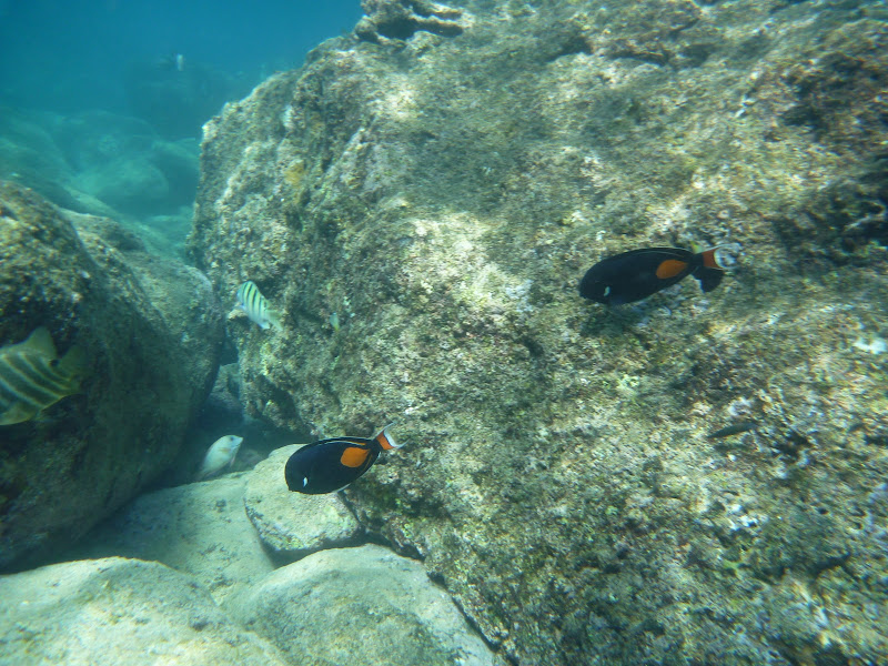 Rpg called life snorkeling in sharks cove for Plenty of fish oahu