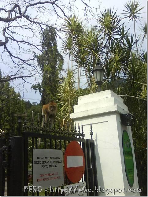 Monkey greet
