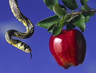 cobra-e-maca-fruto-proibido-3c38e