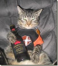 BeerCat05