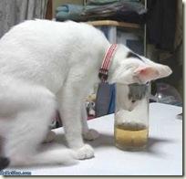BeerCat04
