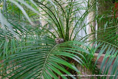 Courtyard Palm MacDonald Highlands