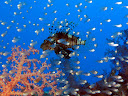 Reef dive in the Eilat gulf of the Red sea
