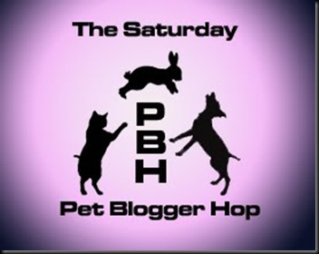 petbloggerhoppinkcopy
