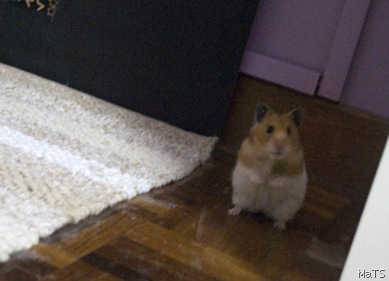 hamster edited